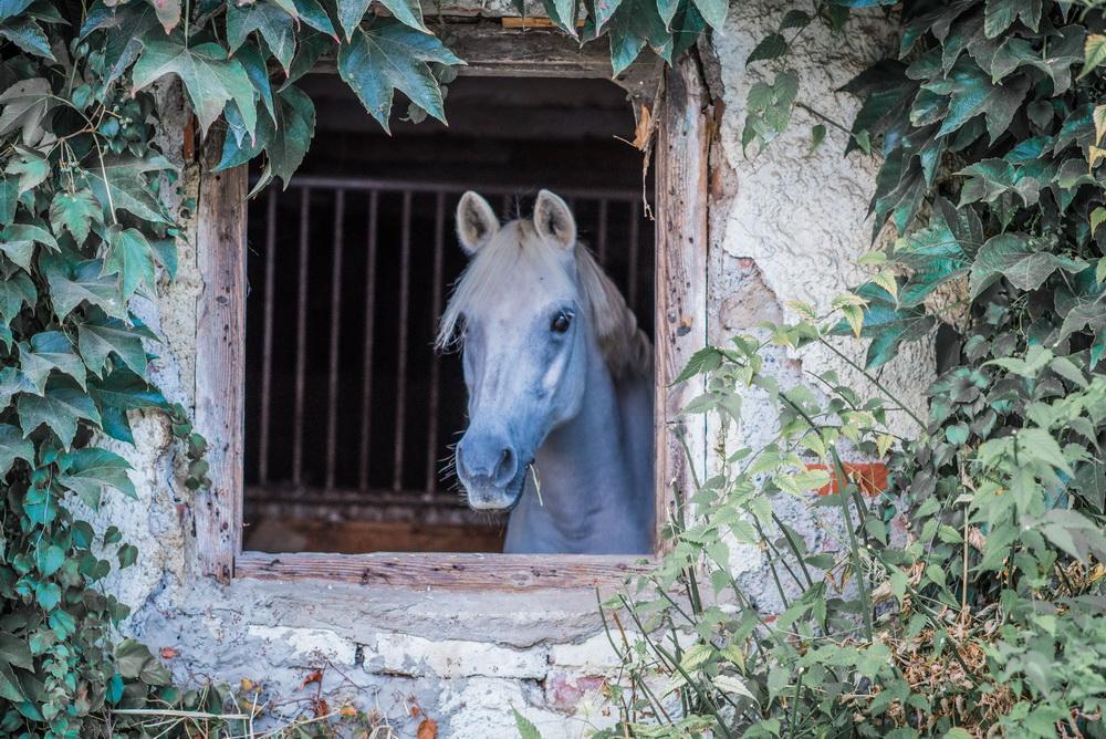 Claudia Sittig Photography - Pferd - Pferdeshooting - Horse 01