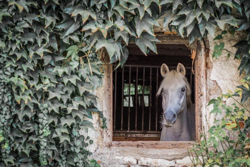 Claudia Sittig Photography - Pferd - Pferdeshooting - Horse 02