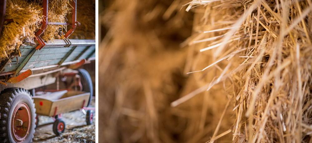 Claudia Sittig Photography - Pferd - Pferdeshooting - Horse 04