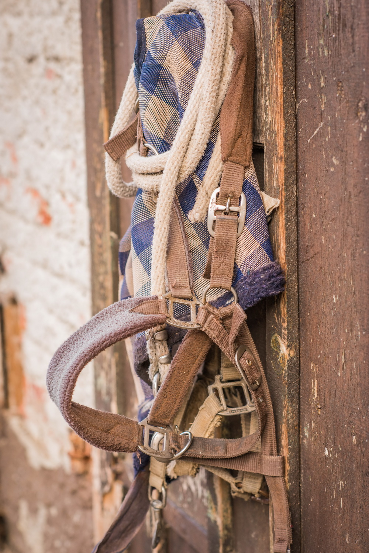 Claudia Sittig Photography - Pferd - Pferdeshooting - Horse 05