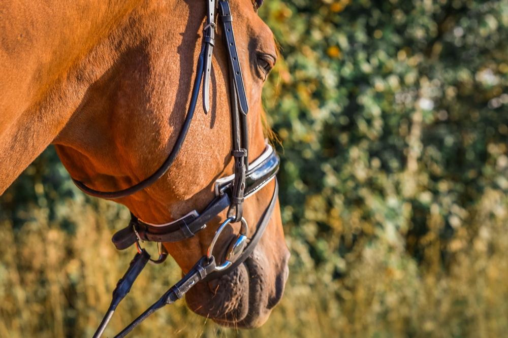 Claudia Sittig Photography - Pferd - Pferdeshooting - Horse 12