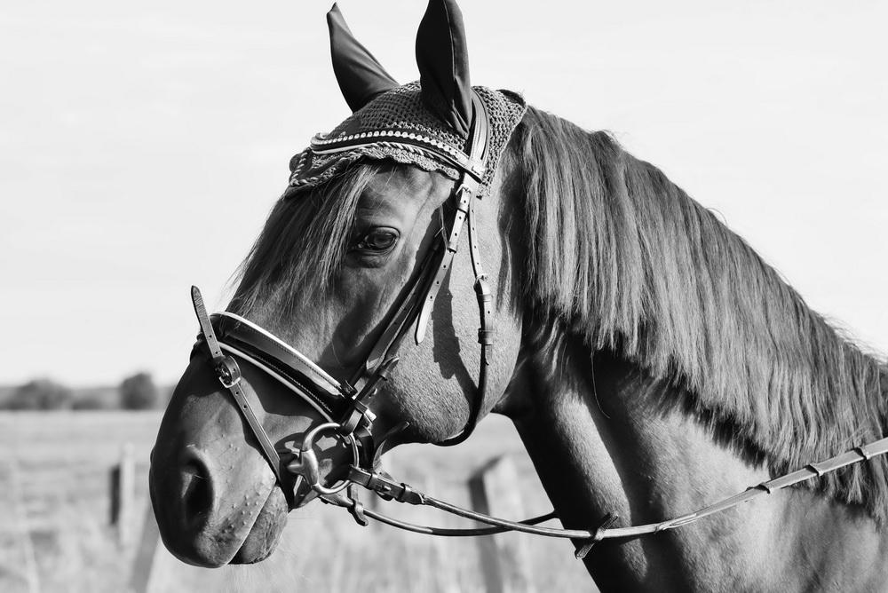 Claudia Sittig Photography - Pferd - Pferdeshooting - Horse 15