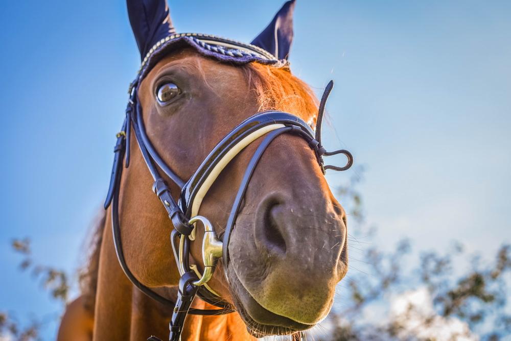 Claudia Sittig Photography - Pferd - Pferdeshooting - Horse 18