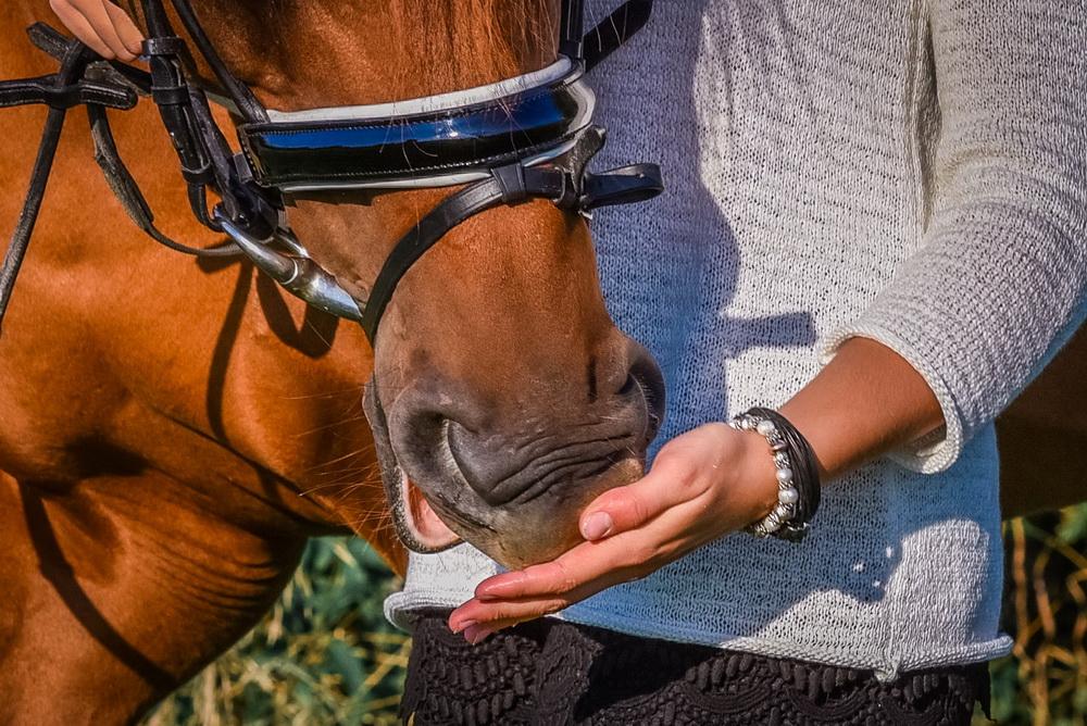 Claudia Sittig Photography - Pferd - Pferdeshooting - Horse 20