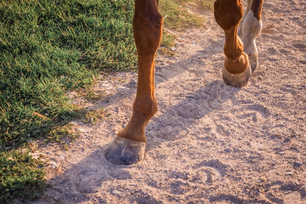 Claudia Sittig Photography - Pferd - Pferdeshooting - Horse 59