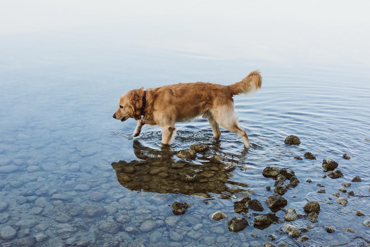 Loveshoot - Julia und Stefan - Claudia Sittig Photography - Lake Ammersee DX0B2530-2